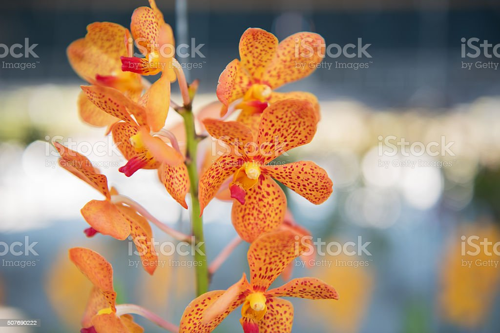 Beautiful orchids flower tree. stock photo