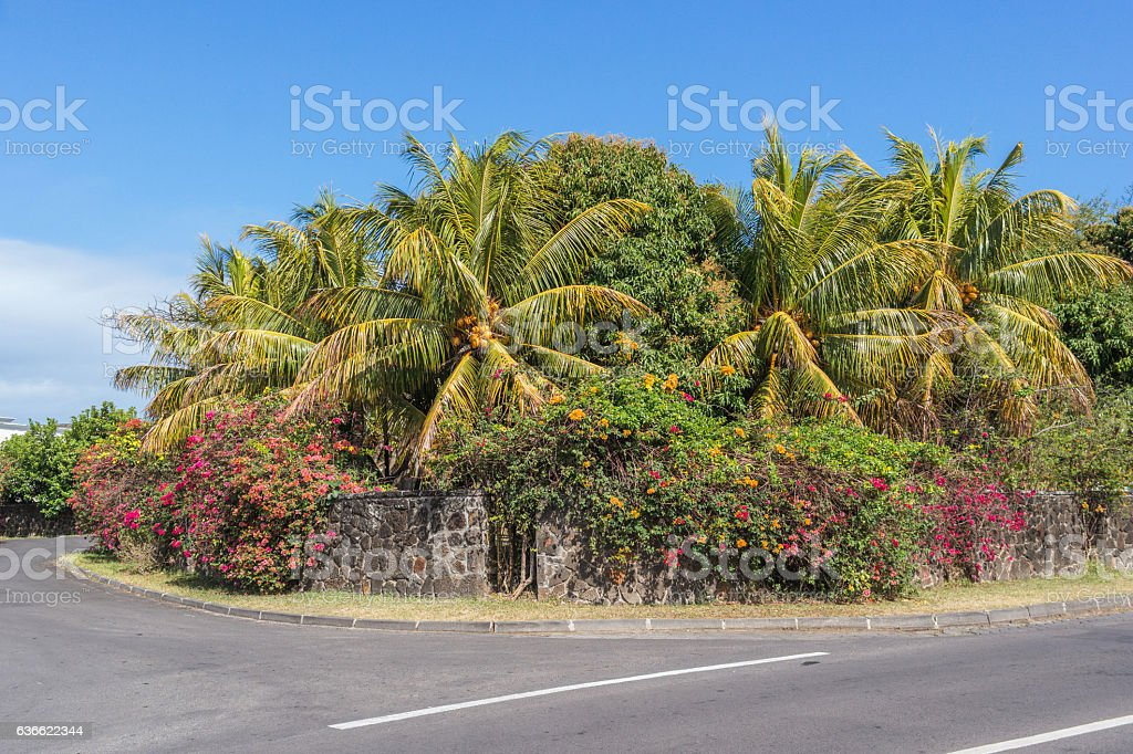 Beautiful palm and flowers near the road, Mauritius stock photo
