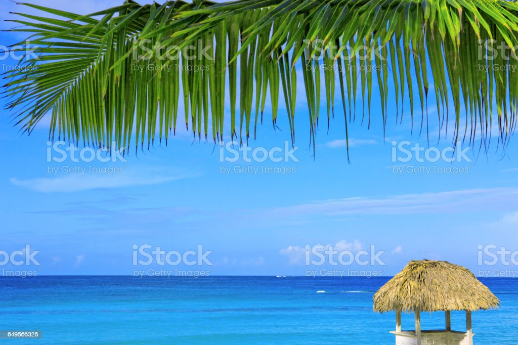 Beautiful palm leaf and caribbean sea stock photo