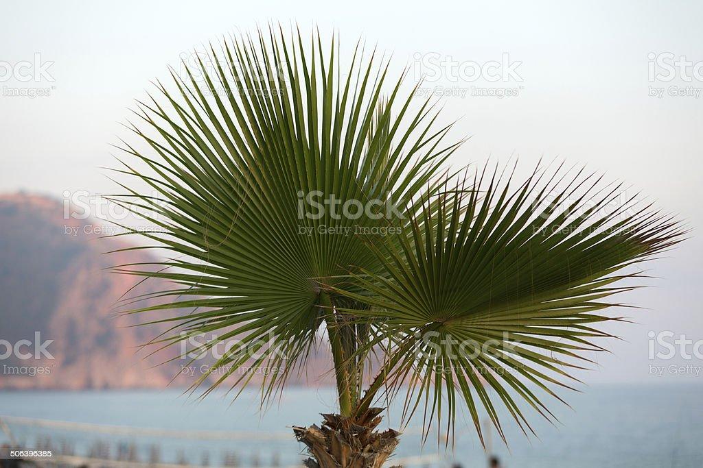 beautiful palm leaves stock photo
