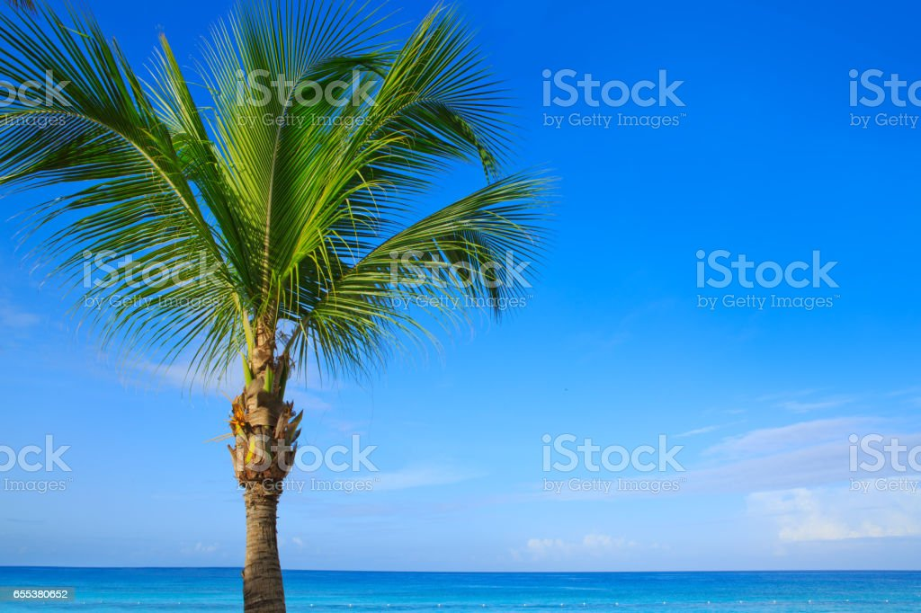 Beautiful palm tree and caribbean sea stock photo