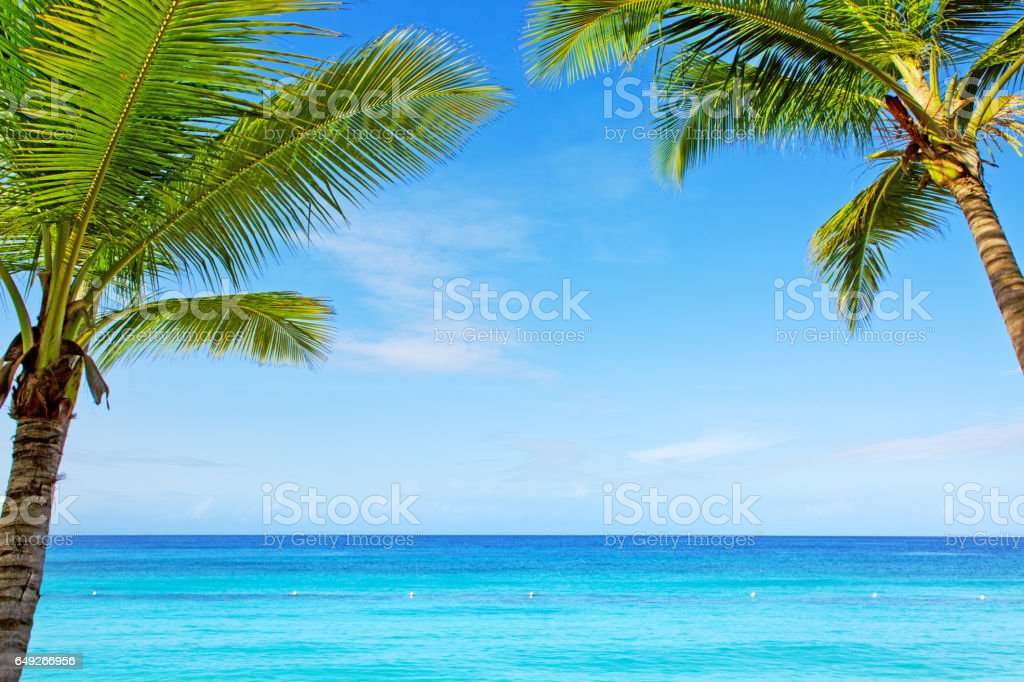 Beautiful palm trees and caribbean sea stock photo