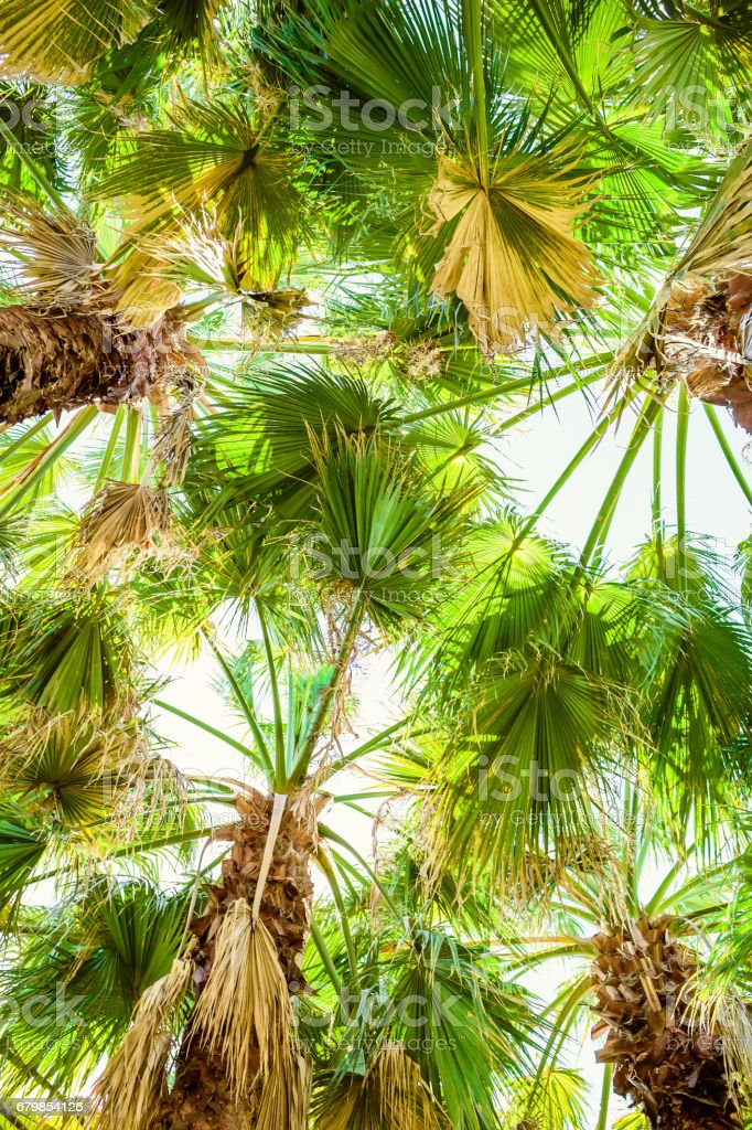 Beautiful palm trees and leaves in tropics, tropical texture. Palm and sky stock photo