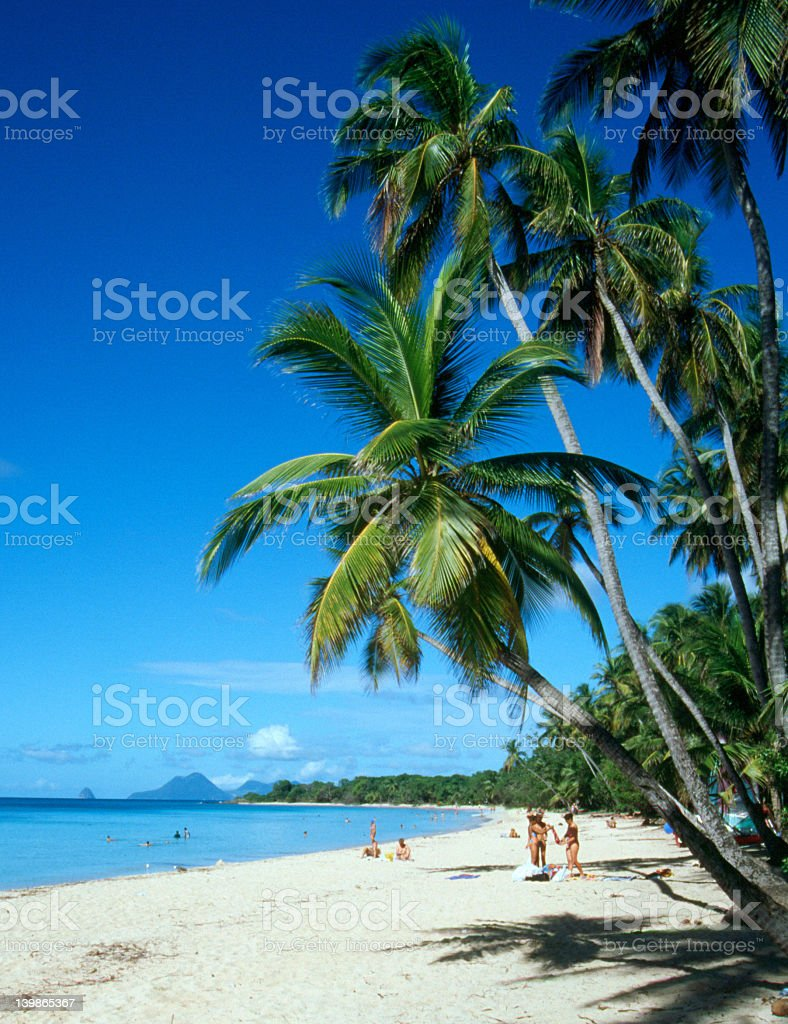 Beautiful palm trees on Martinique beach royalty-free stock photo