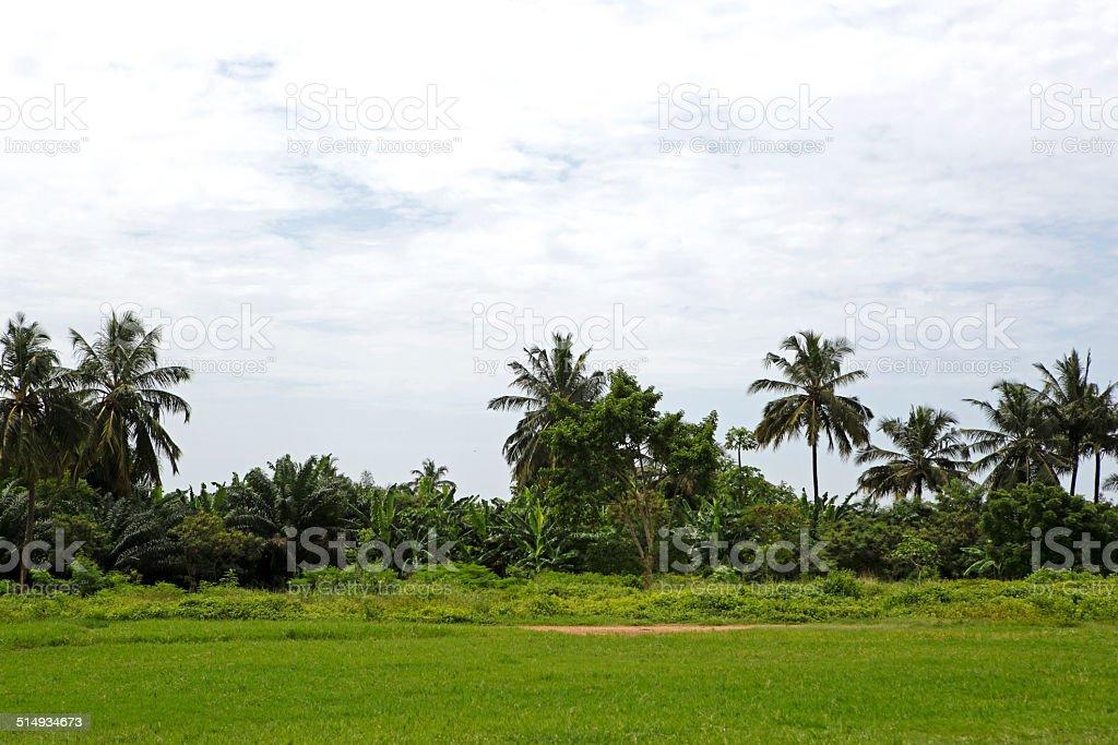 Beautiful palm trees stock photo