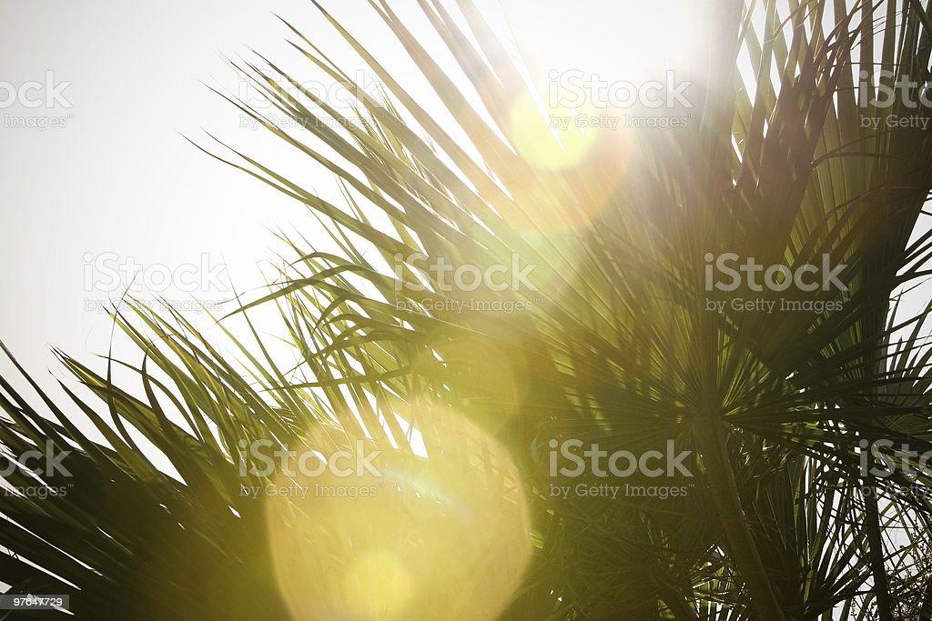 beautiful palm trees royalty-free stock photo
