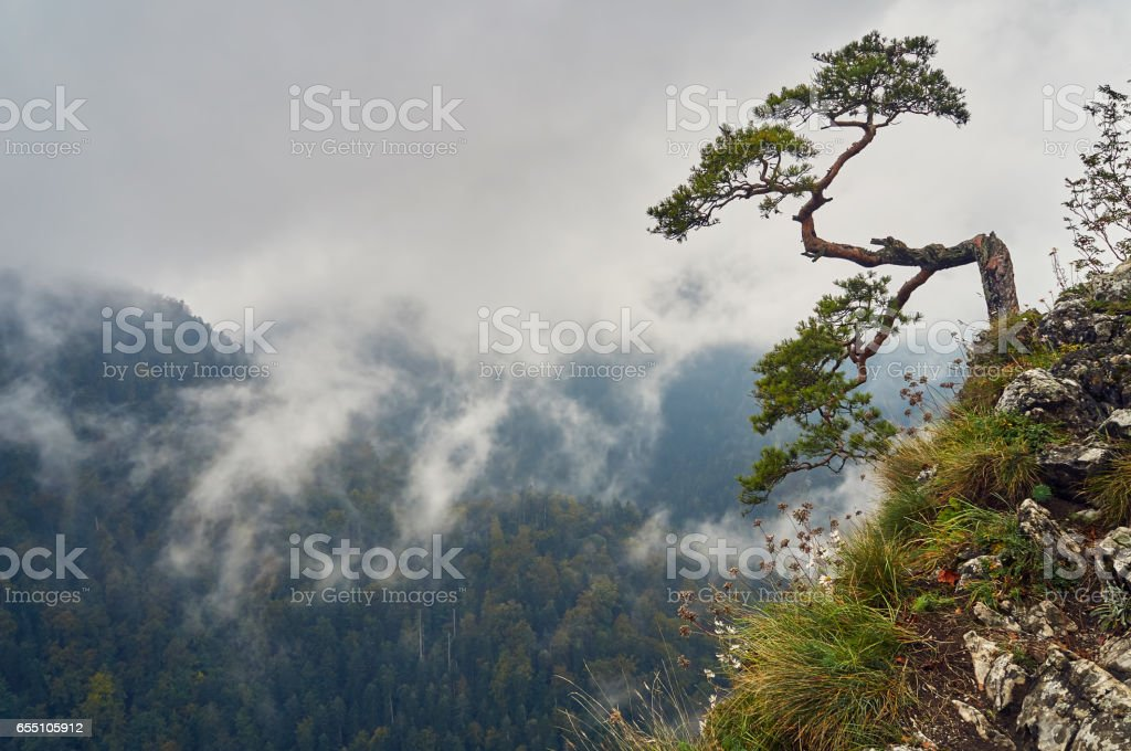 Beautiful panoramic view of the Pieniny National Park, Poland, in rainy and foggy september day stock photo