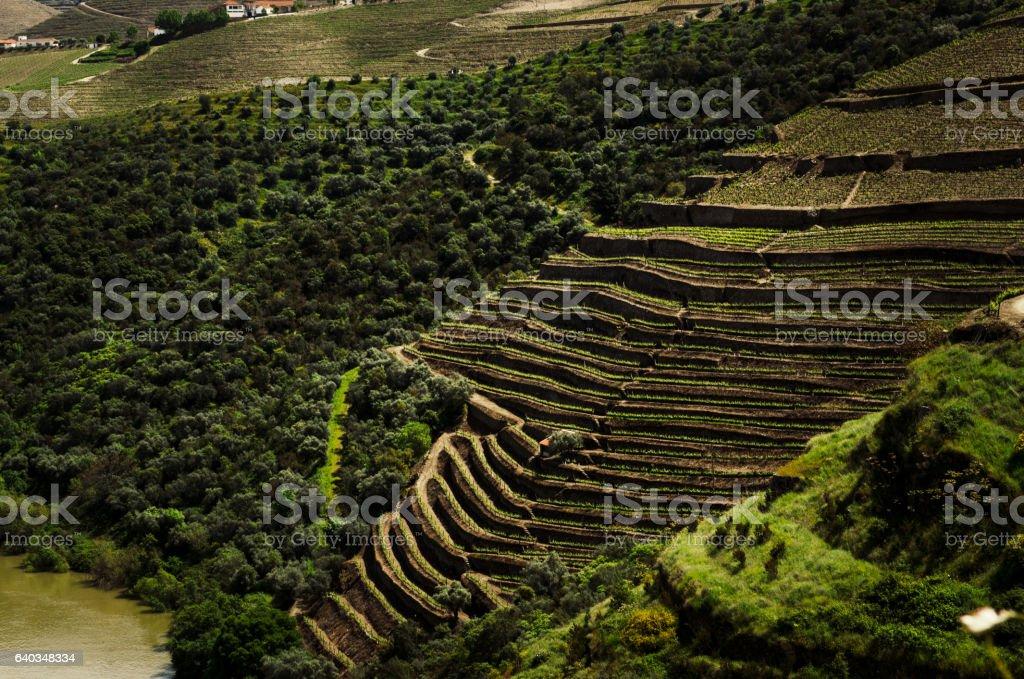 Beautiful panoramic Vineyard view stock photo