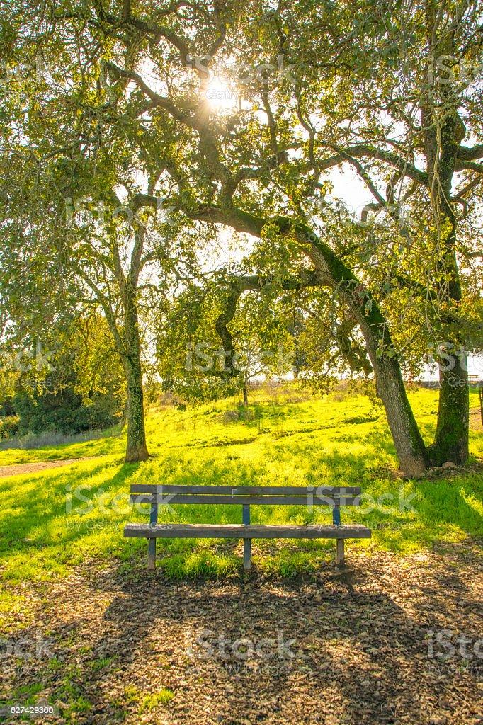 Beautiful Park Bench in Napa stock photo