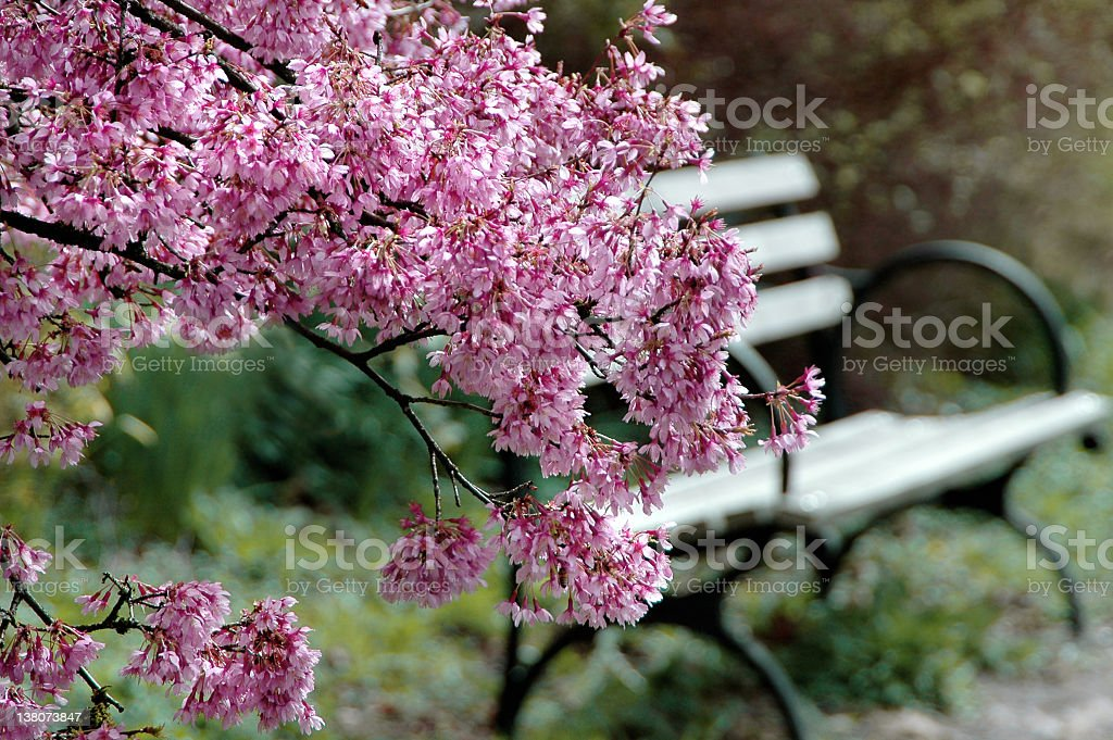 Beautiful Park Bench stock photo