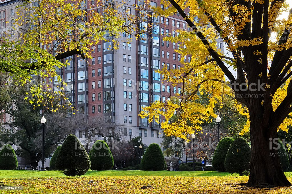 beautiful park in autumn royalty-free stock photo