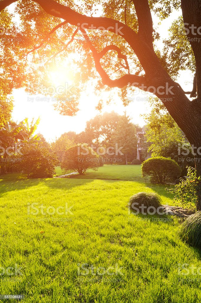 Beautiful park stock photo