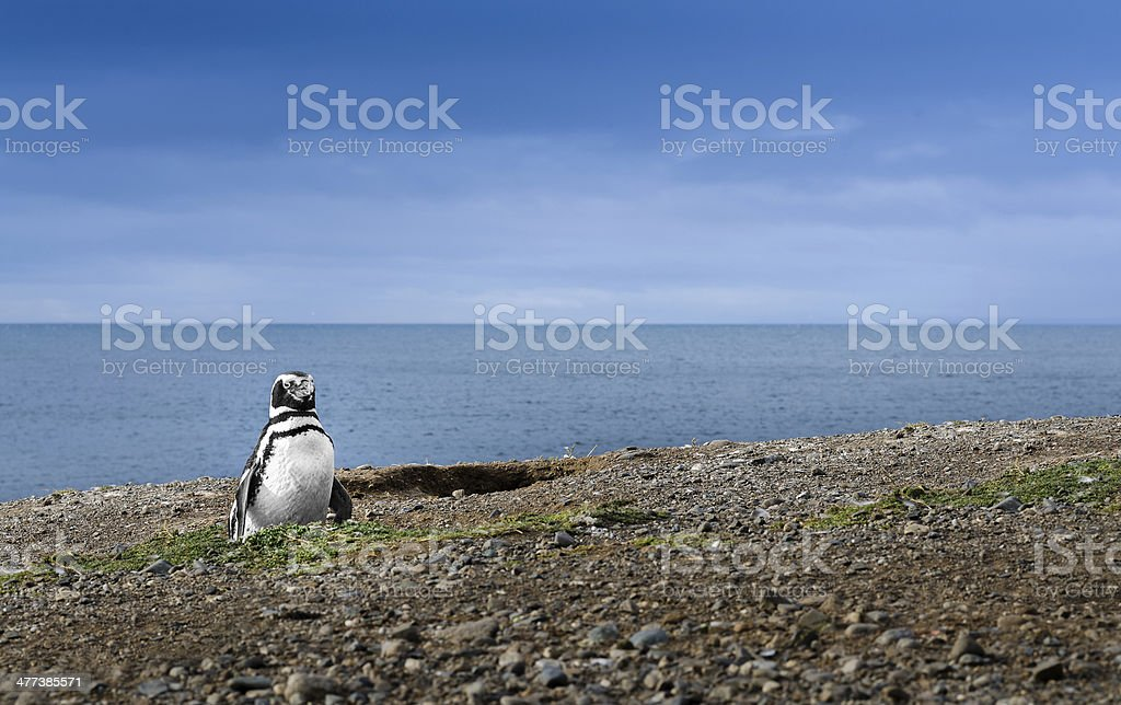 Beautiful Penguin and the Sea. High definition image. stock photo