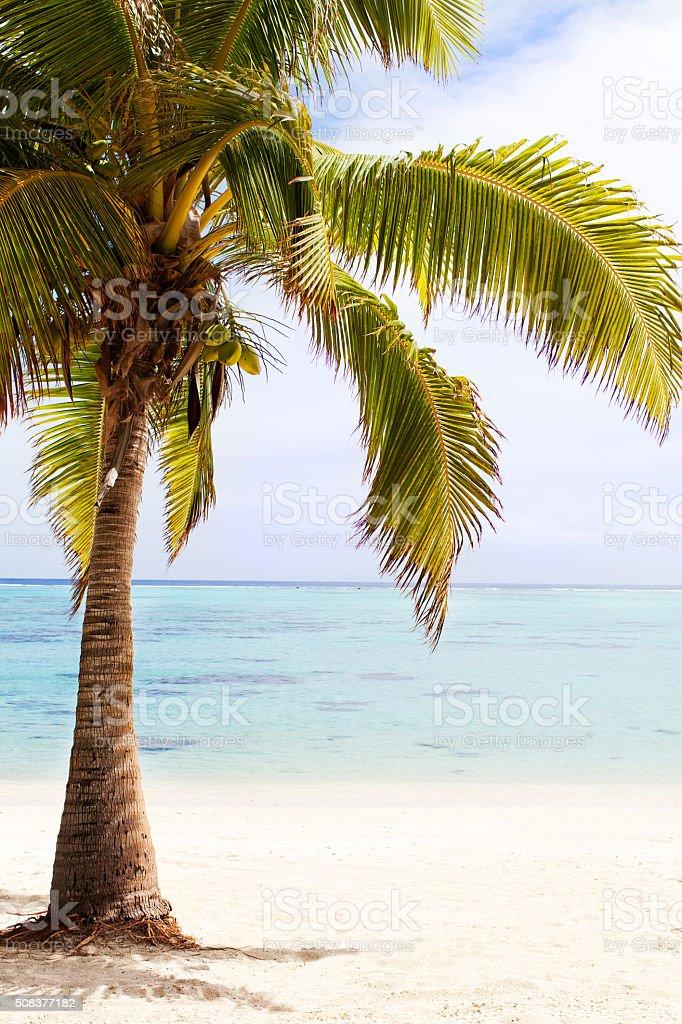 beautiful perfect beach stock photo