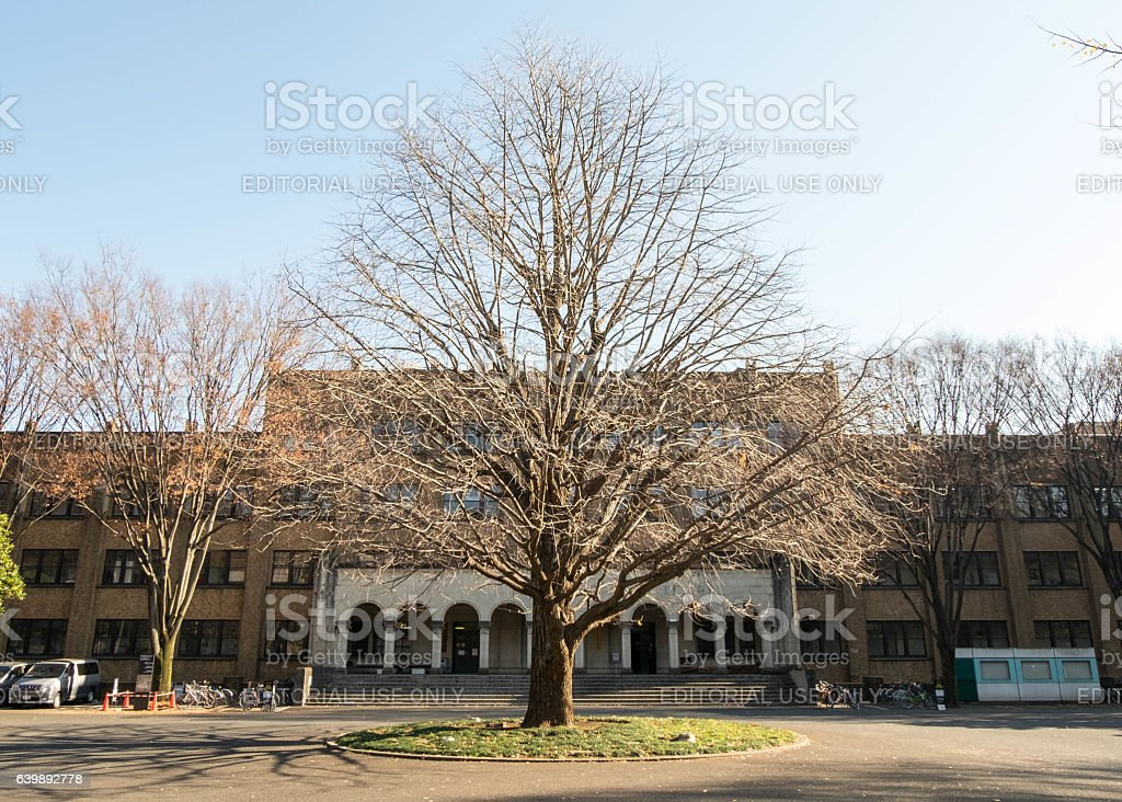 Beautiful perfect-shape leafless trees in winter stock photo
