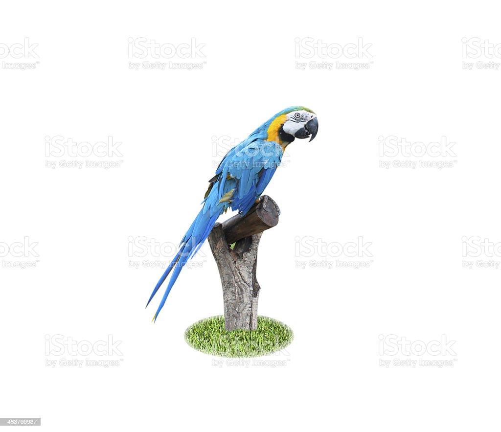 Beautiful Pet Parrot stock photo