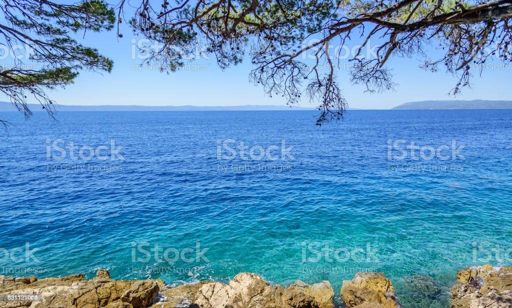 Beautiful pine trees and the shore of the blue sea. Adriatic Sea,...
