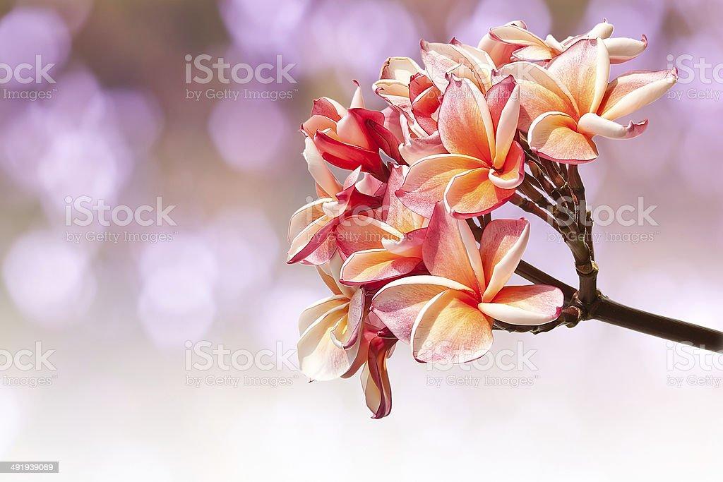 Beautiful pink flowers royalty-free stock photo
