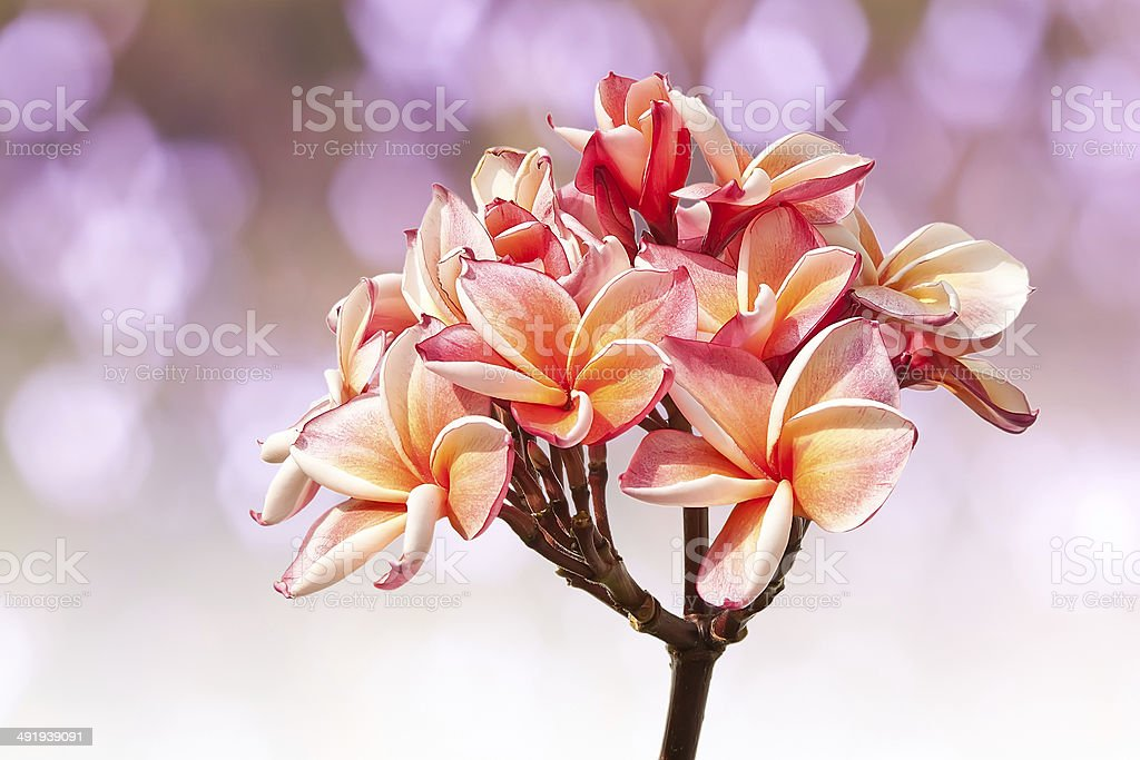 Beautiful pink flowers royalty-free stock photo