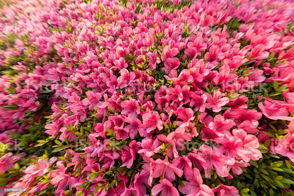 Beautiful pink flowers stock photo
