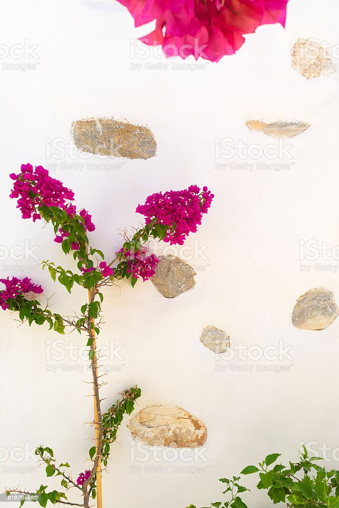 Beautiful pink ivy flower against a patterned wall. stock photo
