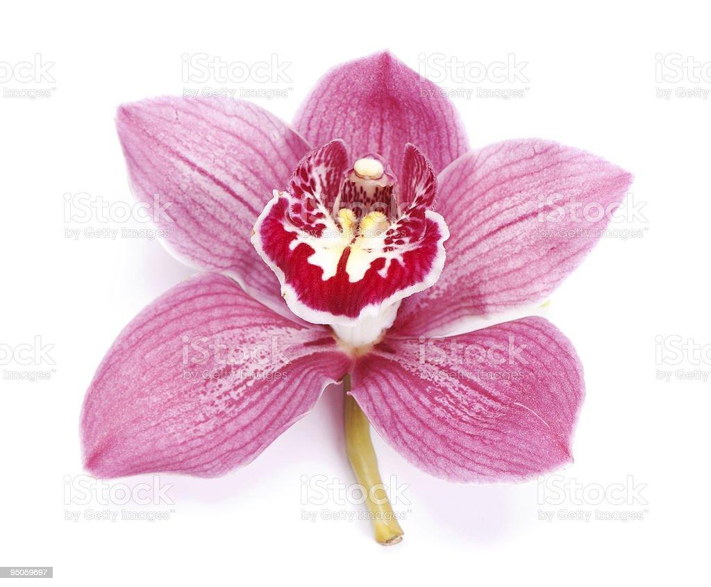 beautiful pink orchid stock photo