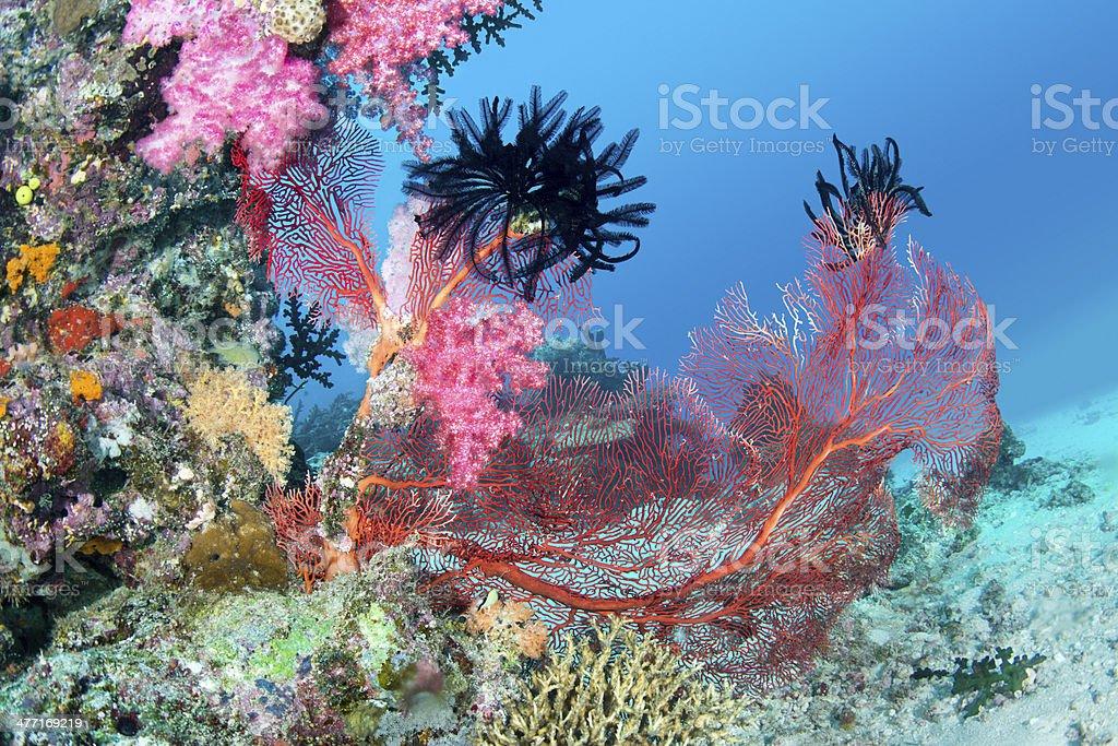 Beautiful pink tropical reef stock photo