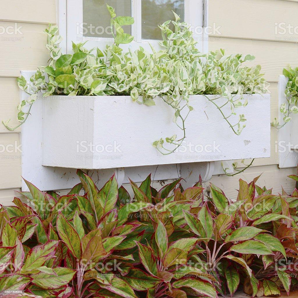 Beautiful plant in garden stock photo