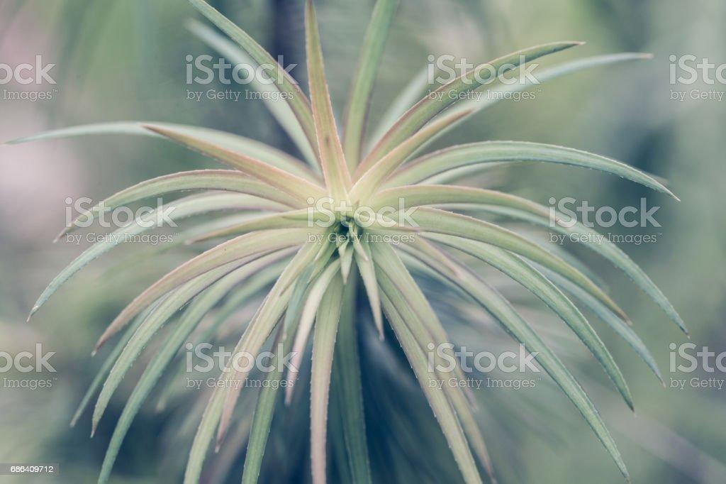 Beautiful plant leaves stock photo
