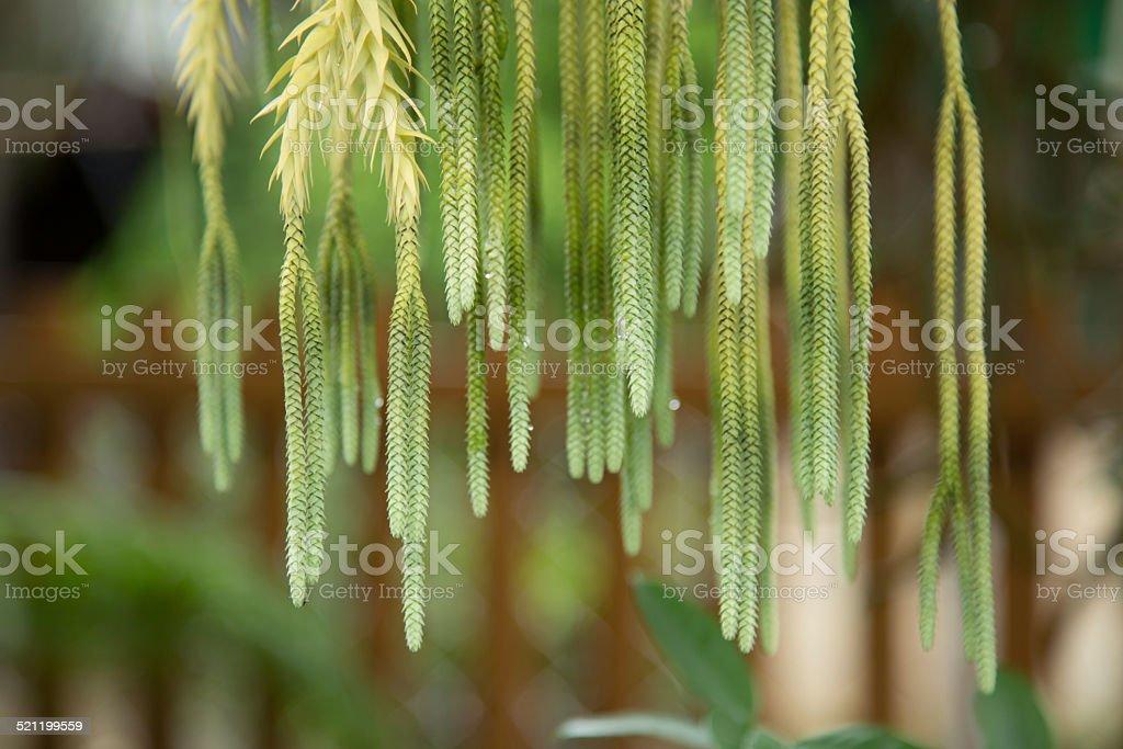 Beautiful plant. stock photo