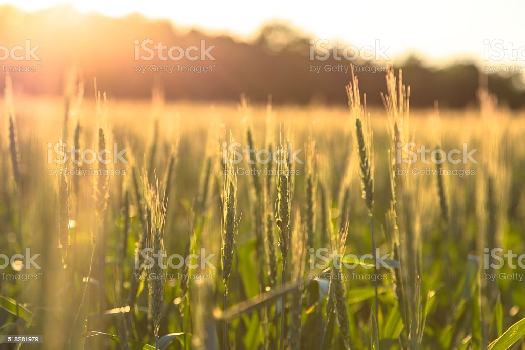Beautiful plants in a field stock photo