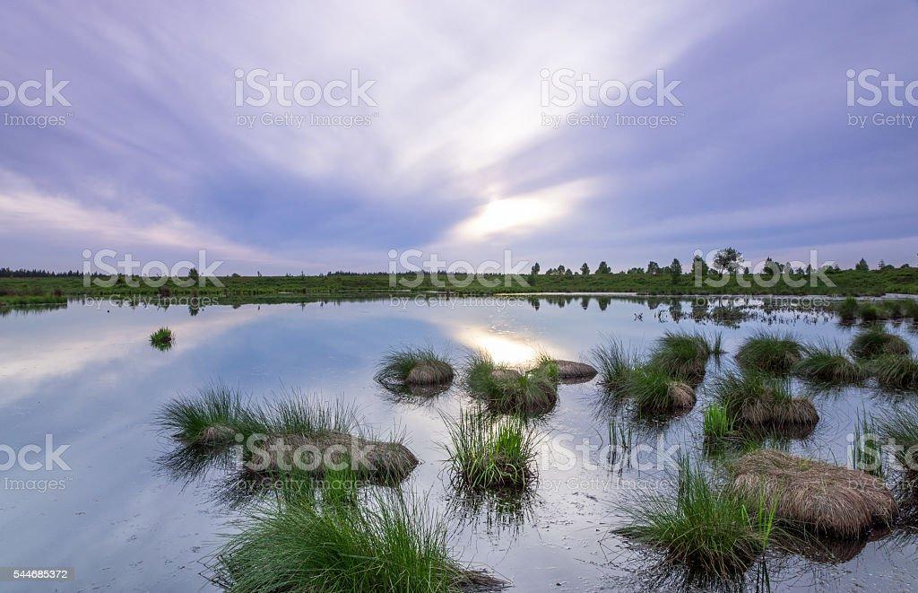 Beautiful pond in Belgium Hautes fagnes stock photo