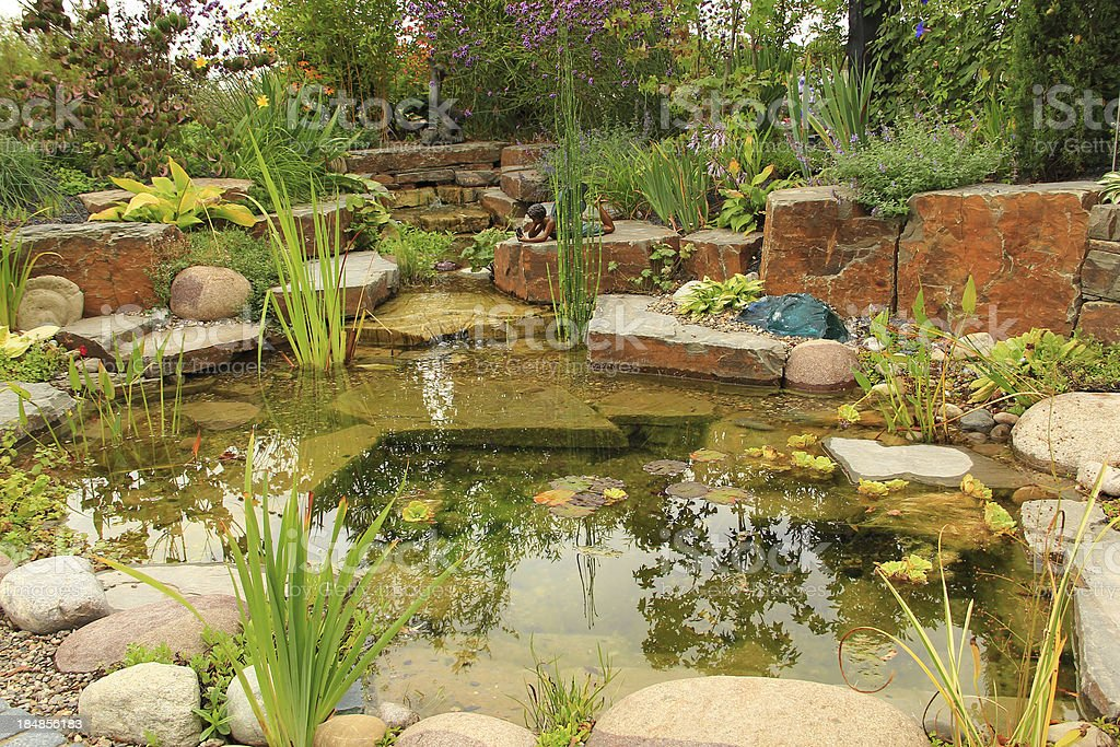 Beautiful pond stock photo