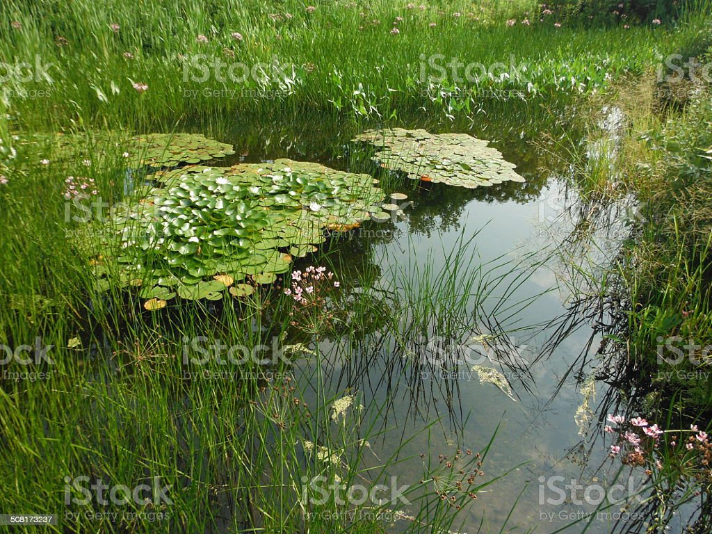 Beautiful pond stock photo
