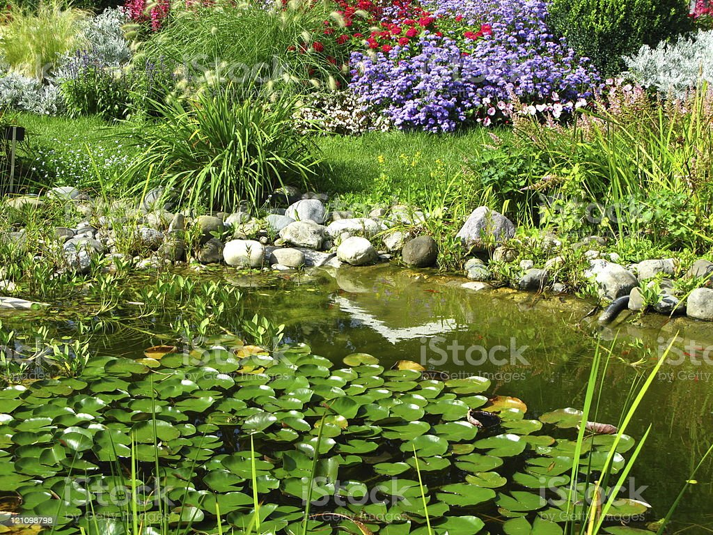 Beautiful pond with water lilies stock photo