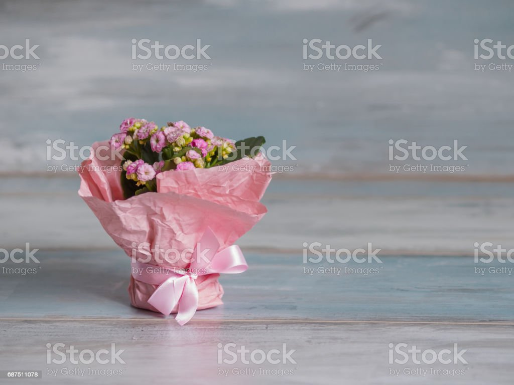 Beautiful pot of flowers wrapped in pink paper, gift stock photo