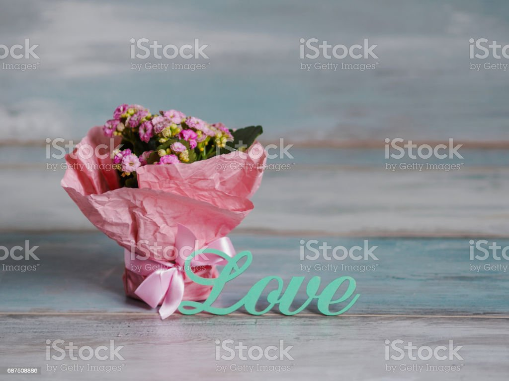 Beautiful pot of flowers wrapped in pink paper, gift. With love stock photo