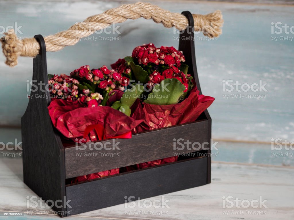 Beautiful pot of flowers wrapped in red paper, gift in a wooden basket stock photo