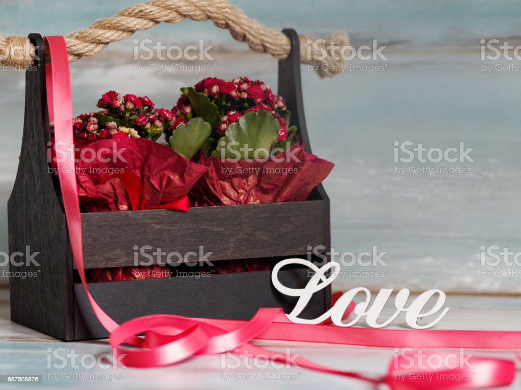 Beautiful pot of flowers wrapped in red paper, gift in a wooden basket, with love stock photo