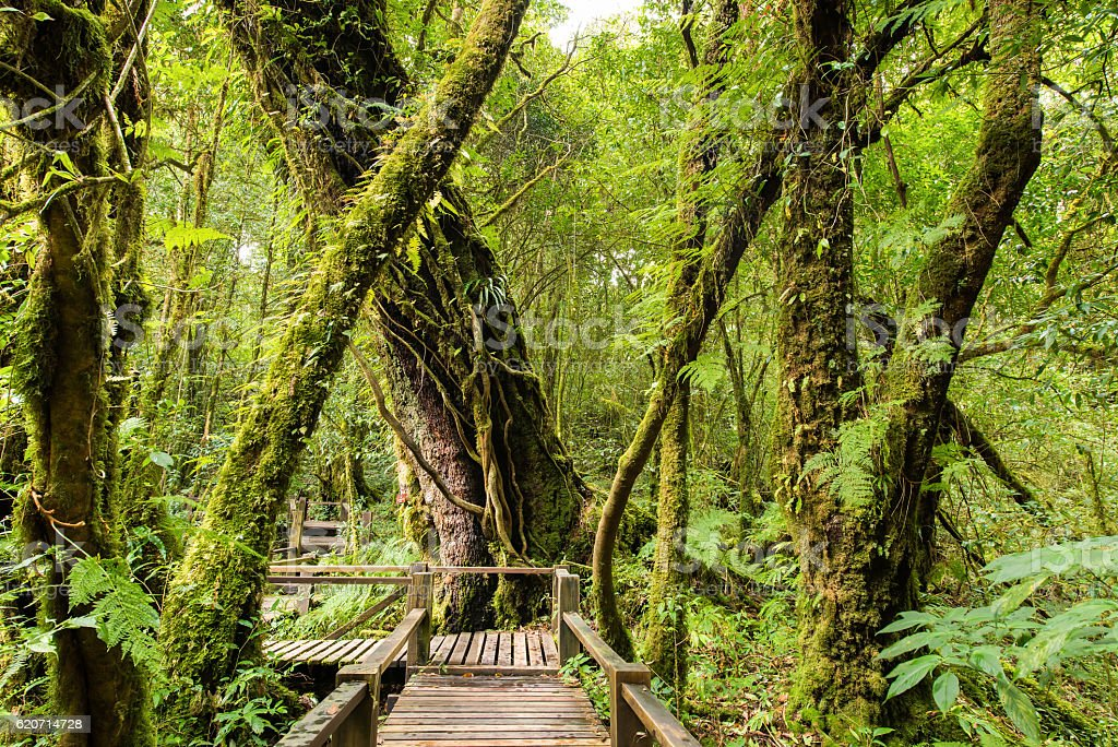 Beautiful primitive and tropical rain forest stock photo