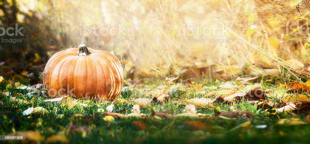 Beautiful pumpkin over fall landscape with lawn , trees and foliage stock photo