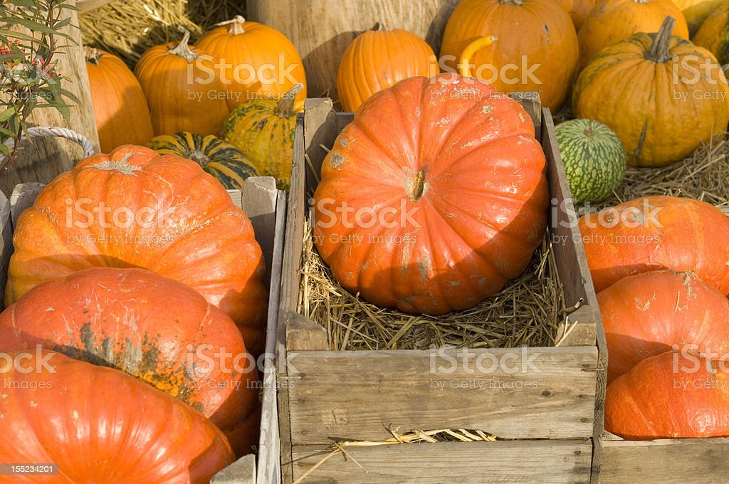 beautiful pumpkins stock photo