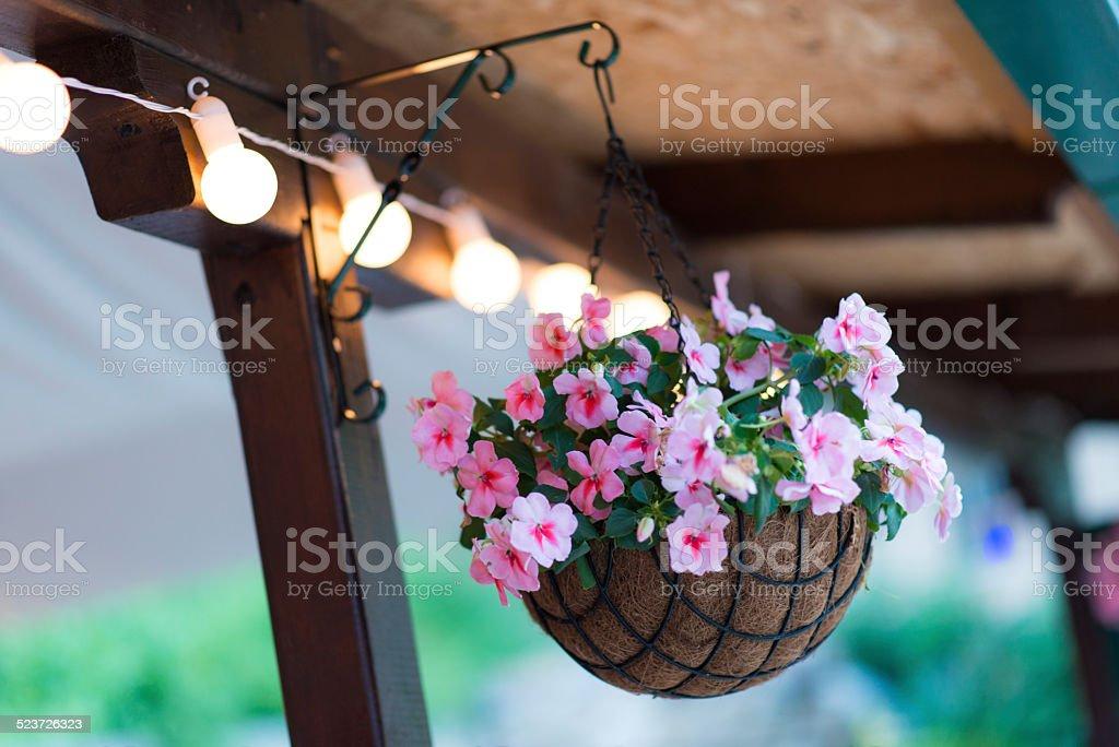 Beautiful Purple Flowers in Hanging Basket stock photo