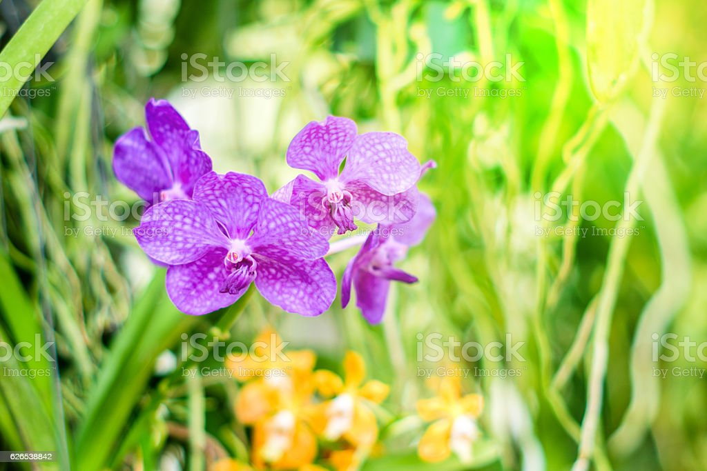 Beautiful purple orchid flowers on a branch stock photo
