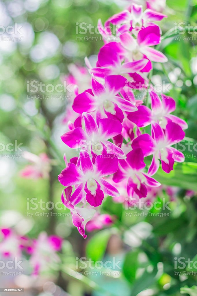 Beautiful purple orchid stock photo