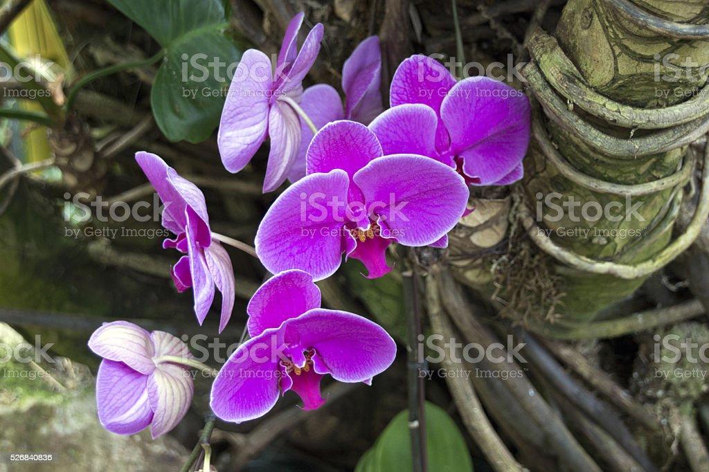 Beautiful Purple Orchids stock photo