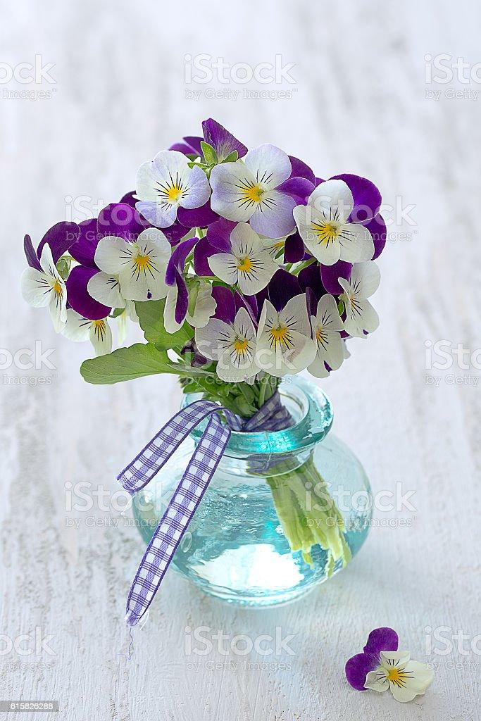 beautiful purple pansy flowers stock photo