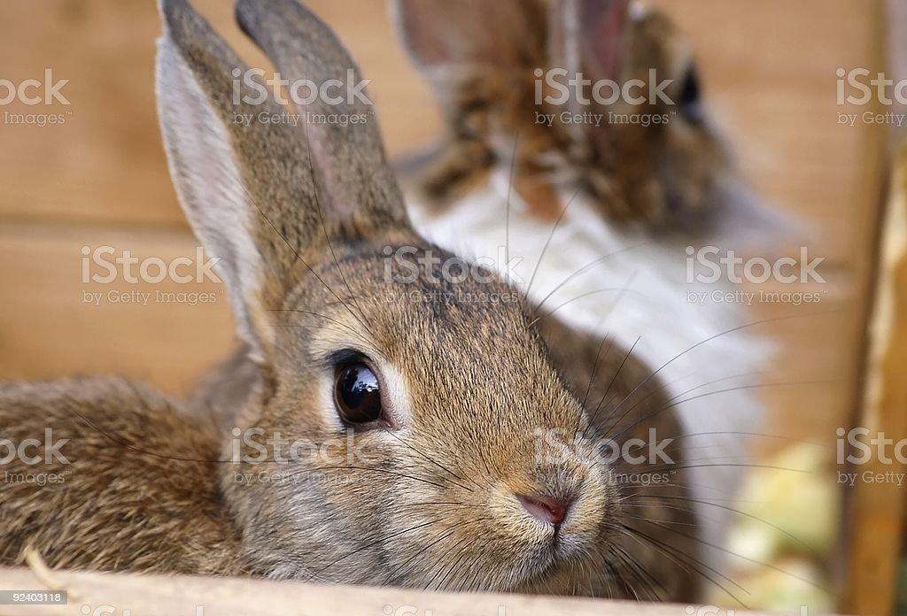 beautiful rabbit stock photo