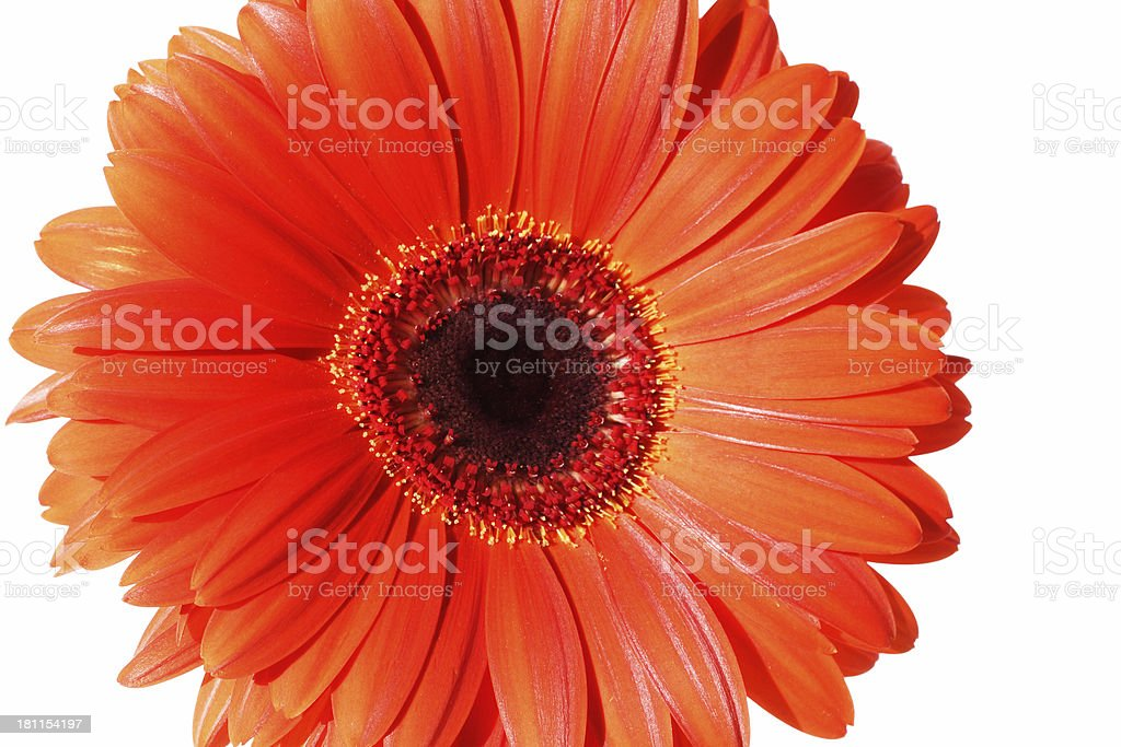 beautiful, radiant ... thoughts of summer royalty-free stock photo