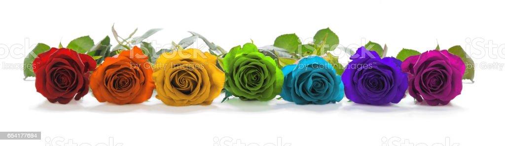 Beautiful Rainbow Colored Row of Roses stock photo